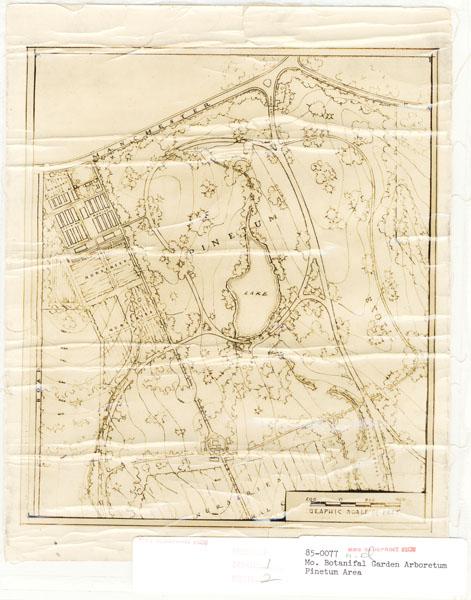 Image of Arboretum, undated pinetum area map; surveyors unknown