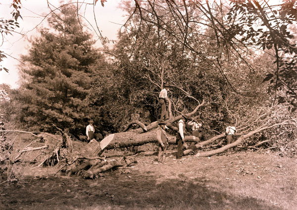 Image of Shaw's Arboretum damaged by tornado.  One 5x7 in. print.