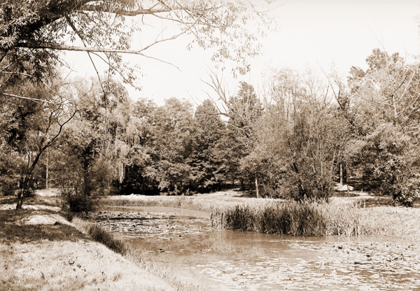 Image of Henry Shaw's Arboretum.  View of willow pond.  PRINT AVAILABLE -- SEE PHO 1982-0005.