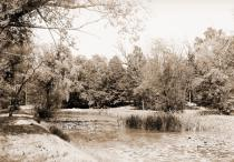 Image of Arboretum.  View of willow pond.