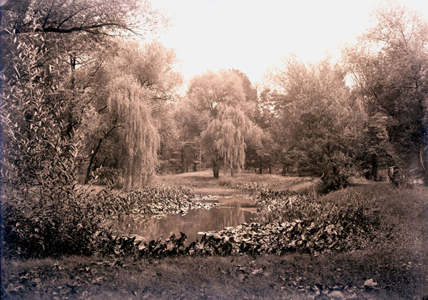 Image of Henry Shaw's Arboretum. View of willow pond.  PRINTS AVAILABLE -- SEE PHO 1982-0006a.