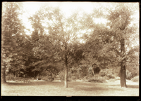 Image of Henry Shaw's Arboretum in 1898.