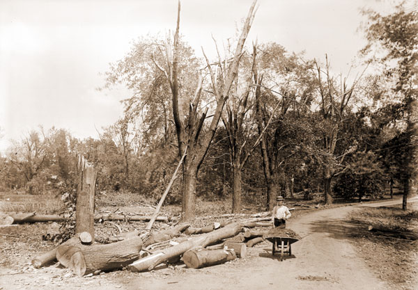 Image of May 27, 1896 tornado damage.  Previously there was a border of soft maples on either side of the driveway from the main garden down to the pasture gates near the creek.  The boy is Robert Meyers (later a garden pupil).
