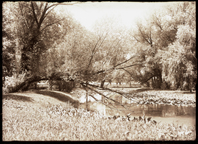 Image of Willow pond with fallen tree.  PRINT AVAILABLE -- SEE PHO 1982-0011.
