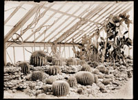 Image of Interior view of Cactus House showing plantings.