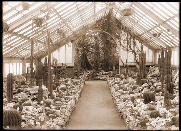 Image of Cactus House (old house just before moving to conservatory constucted in 1912).  1- 2.75x4 in. print.