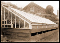 Image of Cool orchid house (lean to attached to east end of Linnaean House).  2- 5x7 in. prints.