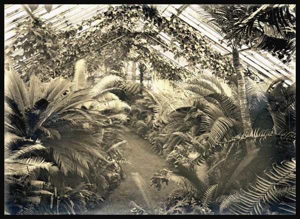 Image of Palm House interior view of the Cycad House looking north from center of house.  PRINT AVAILABLE -- PHO 1982-0068 PHO 2006-3033.