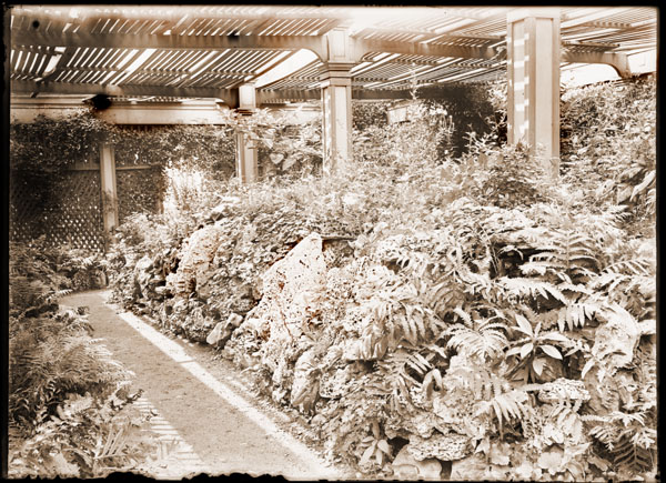 Image of Rockery in Lath House, sometime in the l890's.