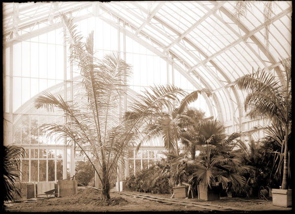 Image of Palm House.  Built in 1912.  Interior view.  Planting palms from D. S. Brown collection in 1913.  (Brownhurst Estate, Kirkwood, Missouri).