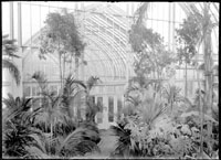 Image of Palm House built in 1912.  Interior view looking north into Fern House.  PRINT AVAILABLE -- SEE PHO 1982-0095.