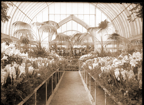 Image of Floral display in north wing of 1912 Palm House. (Once the Meditteranean House).   Hyacinths, probably in 1914.