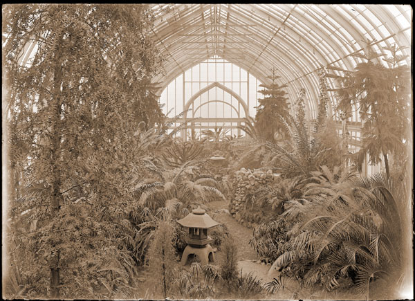 Image of Cycad House located in the north wing of the Palm House built in 1912.  PHOTO AVAILABLE -- SEE PHO 1982-0104, PHO 2006-3029.