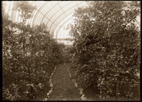 Image of South end of 1912 Palm House.
