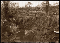 Image of Fern House (north end of 1912 Palm House).  PRINT AVAILABLE -- SEE PHO 1982-0113.