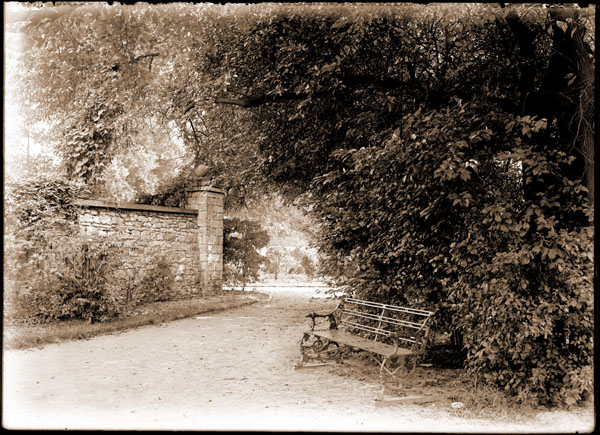 Image of Henry Shaw's Arboretum.  Under macluras at south end of west wall.  Wooden and metal bench visible.  Wall in background.