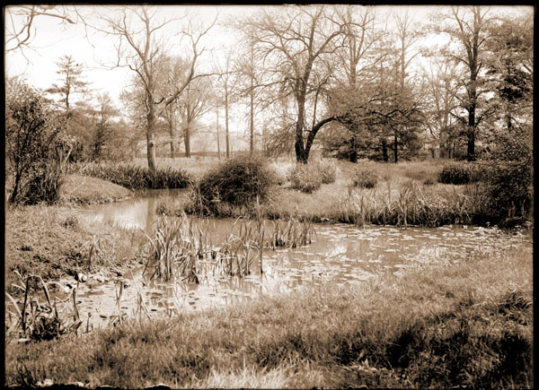 Image of Henry Shaw's Arboretum. View of the northwest part of Arboretum pond (from the north).