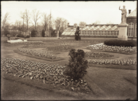 Image of View of main greenhouse and steps on west side, west wall of Garden.  Tulips in planting.  PRINT AVAILABLE -- SEE PHO 1982-0239, PHO 2006-3043.