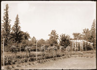 Image of Rose garden located just south of Tower Grove House.