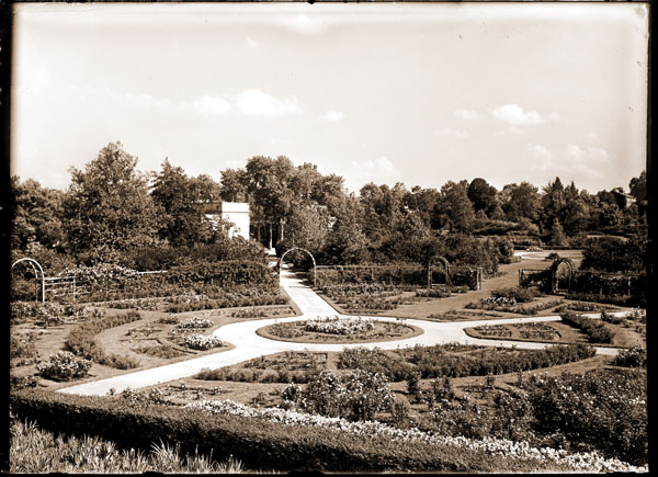 Image of Rose Garden in front of Linnaean House. View is toward southeast, looking toward Main Gate.  One 5x4 in. loose negative; one 7x5 in. print.
