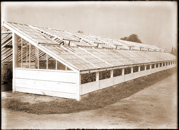 Image of Chrysanthemum house. Greenhouse made of coldframe sash. Location: About due north of Linnaean House.  On negative: 'Chrysanthemum house showing method of side ventilation.'