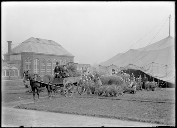 Image of Chrysanthemum show. Gardeners loading plants for delivery to charities after the show. Part of the 1868 Conservatory range in background.  People in formal dress.