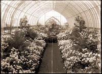 Image of Chrysanthemum Show of 1912.  This is in a series of prints from each year of the show.  PRINT AVAILABLE -- SEE PHO 1982-0289.