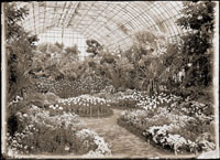 Image of Chrysanthemum Show view from the interior of the Floral Display House.  PRINT AVAILABLE -- PHO 1982-0297.