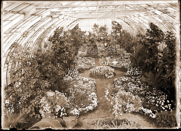 Image of Chrysanthemum Show. View from the rafters of interior of Floral Display House.