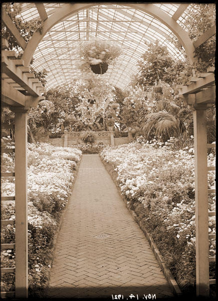 Image of Chrysanthemum Show. View toward banana pit.
