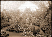 Image of Floral Display House interior. Pandanus, topiary specimens in photograph. (Probably one of the first topiary exhibits).