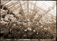 Image of Orchid display in wing of 1868 greenhouse.