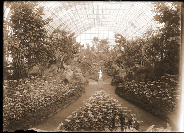 Image of Poinsettia Show with view toward south end of Floral Display House. Marble sculpture of lady with a rose in her hand in center of display. 1- 7x5 in. print.