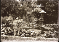 Image of N.B. Japanese lantern is undoubtedly one of the two in the Garden which were originally in the Japanese exhibit at the St. Louis World's Fair, 1904.  1 7x5 in. print.