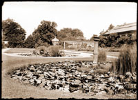 Image of Lily Pond south of Linnaean House, Lath House, and pavilion.  Linnaean House is visible in the background.