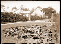 Image of Lily Pond south of Linnaean House. Domed 1897 greenhouse addition and cactus house in background.