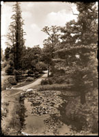 Image of Lily Pool west of Pergola (hardy lilies). View of pool (presently behind Climatron) and path toward north; from John Noyes landscape design.
