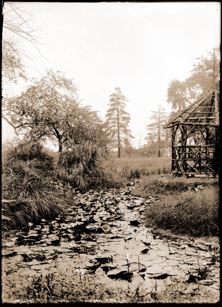 Image of Lily Pond in Arboretum with rustic gazebo visable in the  background.  2 5x7 in. prints.
