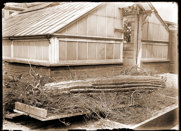 Image of Cactus in shipping crate from Arizona.  Greenhouse in background shows door sign 'Entrance' and 'Desert Plants'.
