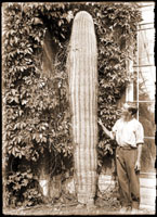 Image of Cereus giganteus.  Giant cactus from Arizona.  Man standing next to cactus in front of greenhouse.