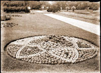 Image of Mamillaria bed in parterre of the Missouri Botanical Garden