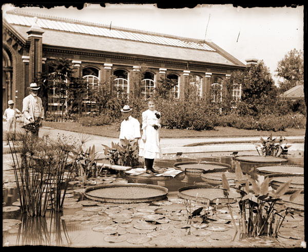 Image of Victoria cruziana.  Lady standing on leaf, two men and a boy in front of Linnaean House.  1 5x7 in. print.  Print available at  PHO 2006-2247.