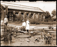 Image of Victoria cruziana. Lady standing on leaf, two men and a boy in front of Linnaean House.