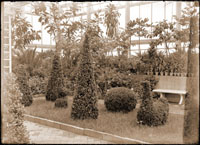 Image of Shakespearean Garden in the Floral Display House with topiary forms.