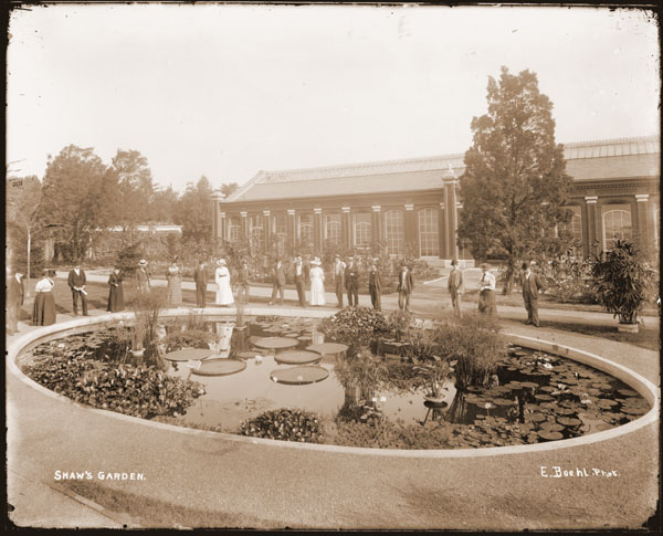 Image of Linnaean House with lily pools (Victorias, Nymphaeas, Eichhornias and Cypress). Visitors gathered around pool in.  'Shaw's Garden.'  Two black and white prints.