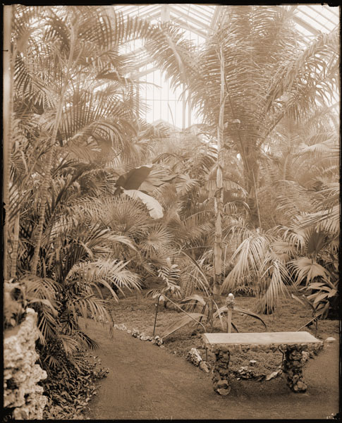 Image of Palm House interior with stone bench in foreground.