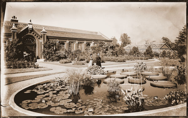 Image of Lily Pools with Victoria lilies.  Linnaean House in background.