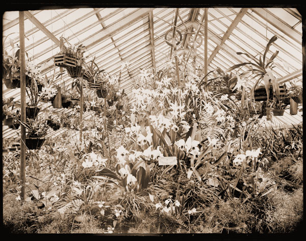 Image of Collection of flowering orchids in greenhouse.