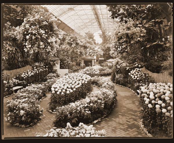Image of View of the 1933 Mum Show inside the Floral Display House.  Paul Kohl, Designer.