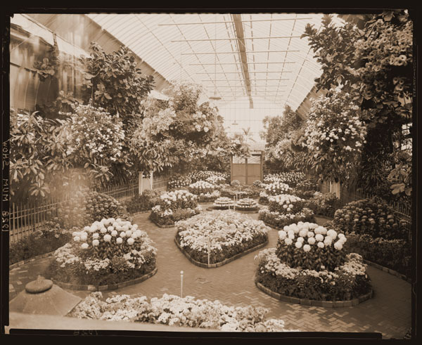 Image of The 1928 Mum Show held inside the Floral Display House.  Paul Kohl, designer.
